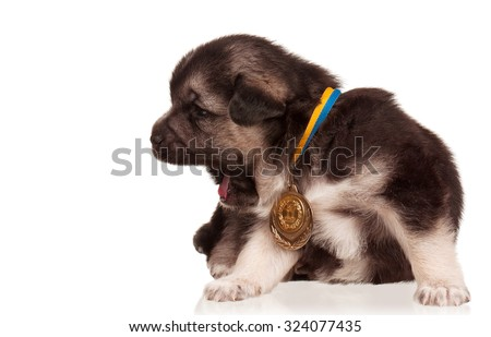 Cute puppy of 3 weeks old with gold medal on a white background  - stock photo