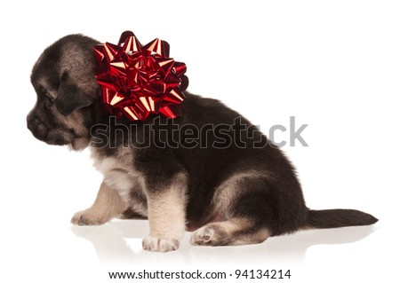 Cute puppy of 3 weeks old with red bow on a white background