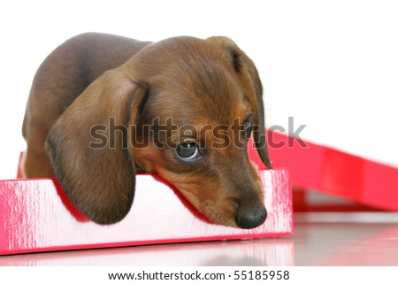 Cute puppy on a red box - stock photo