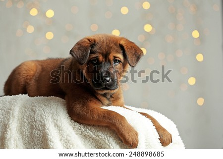 Cute puppy on Christmas lights background - stock photo