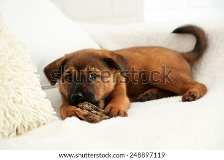 Cute puppy on sofa on brick wall background - stock photo