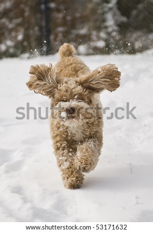 Cute puppy playing in the snow - stock photo