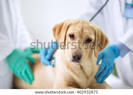Cute puppy visit vet ambulance - stock photo