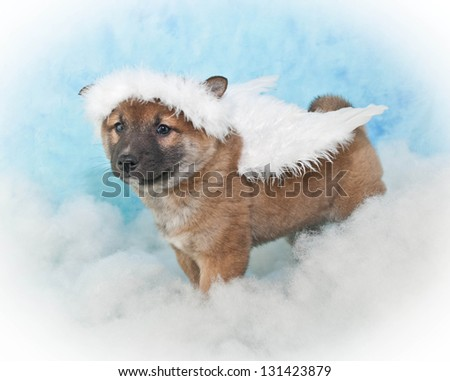 Cute puppy wearing Angel wings and a halo sitting in the clouds, with a blue background. - stock photo
