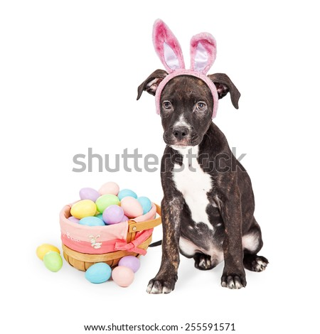 Cute puppy wearing Easter bunny ears and basket of colored eggs - stock photo
