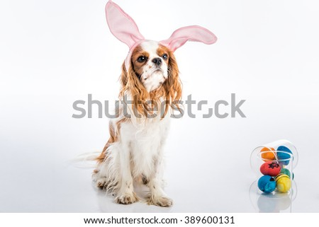 Cute puppy with bunny ears big eyes with colored Easter eggs