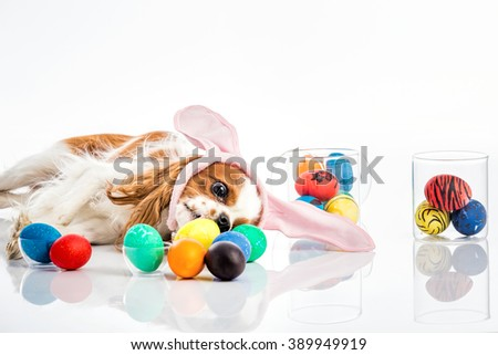 Cute puppy with bunny ears licks colored Easter eggs - stock photo