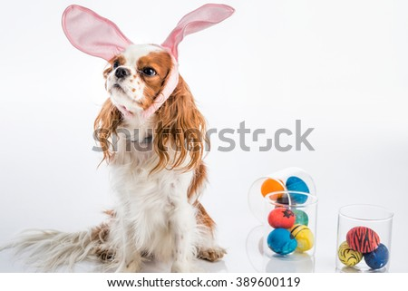 Cute puppy with bunny ears looking away with colored Easter eggs
