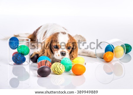 Cute puppy with resting with colored Easter eggs