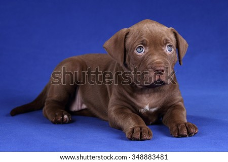 Cute puppy with sad eyes - stock photo
