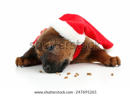 Cute puppy with Santa hat isolated on white - stock photo