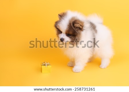 cute puppy with the holiday parcel - stock photo