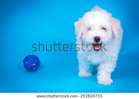 Cute puppy with toy on blue background - stock photo