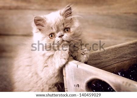 Cute pussy cat - stock photo