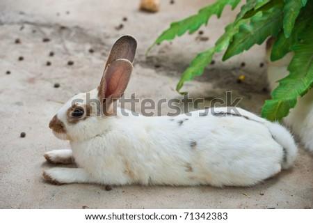 Cute Rabbit - stock photo