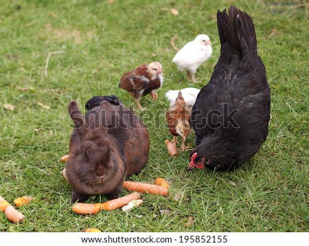 Cute rabbit and chickens on the grass       - stock photo