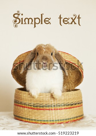 Cute Rabbit. Copy space