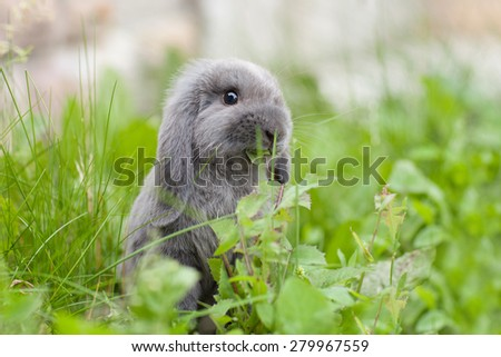 Cute rabbit eating grass - stock photo