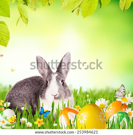 Cute rabbit in grass with coloured eggs, Free space for text - stock photo