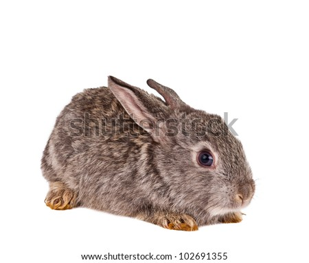 Cute rabbit on white background