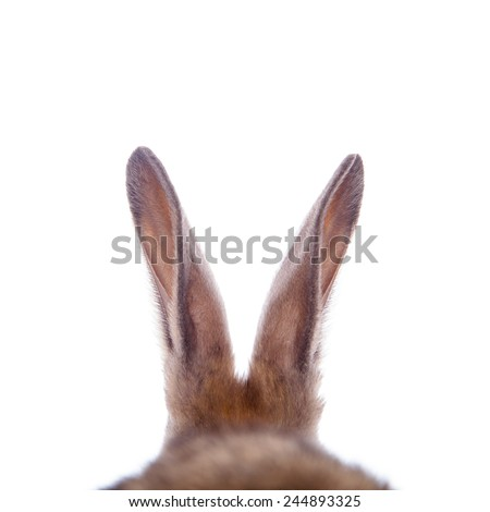 Cute rabbit's ears on the white background.  - stock photo