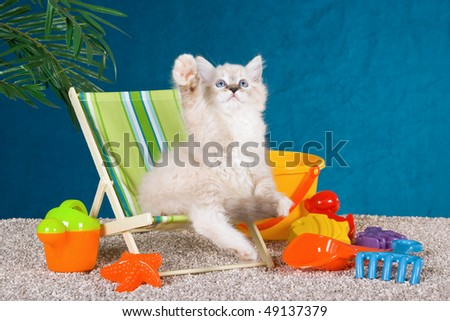 Cute Ragdoll kitten on deckchair on fake beach with colorful toys - stock photo