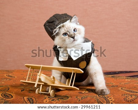 Cute Ragdoll kitten wearing pilot outfit with miniature wooden biplane on brown background - stock photo