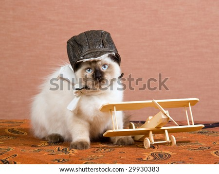 Cute Ragdoll kitten wearing pilot scarf and hat with miniature biplane - stock photo