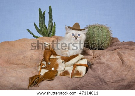 Cute Ragdoll kitten with cowboy hat and saddle, cactus on fake rocky mountain - stock photo