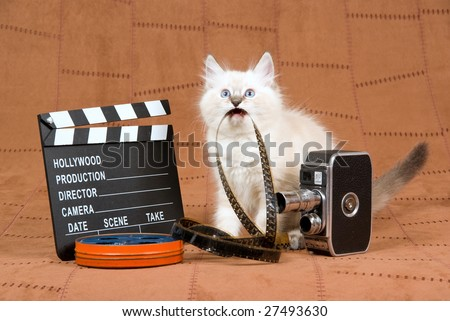 Cute Ragdoll kitten with movie clipboard, vintage movie camera and reel of film, on brown suede background - stock photo