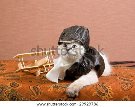 Cute Ragdoll kitten with pilot leather outfit and miniature wooden biplane on brown background - stock photo