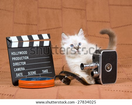 Cute Ragdoll kitten with vintage movie camera, reel of film and clapperboard movie clipboard on brown suede - stock photo