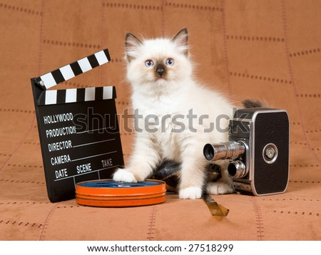 Cute Ragdoll kitten with vintage movie camera, reel of film and movie clipboard on brown suede background - stock photo