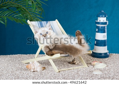 Cute Ragdoll kittten lying in miniature deck chair on fake beach - stock photo