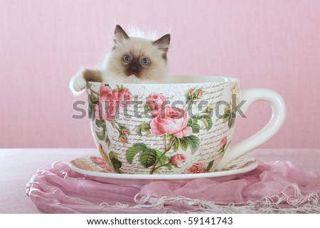 Cute Ragdoll sitting inside large cup on pink background - stock photo