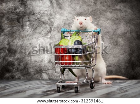 Cute rat with a shopping cart at a store - stock photo