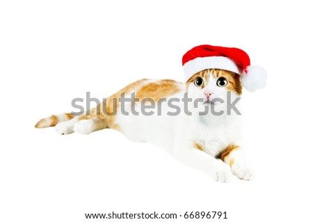 cute red and white cat in santa's hat isolated - stock photo