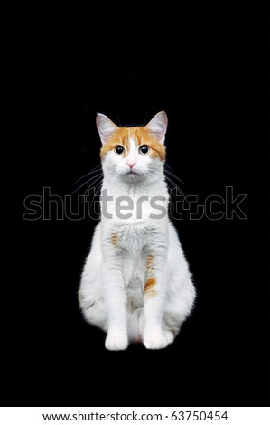 cute red and white cat on black background - stock photo