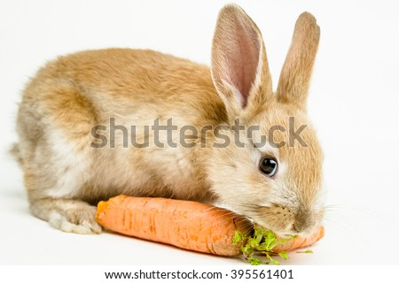 Cute red baby easter rabbit eating carrot on white background - stock photo