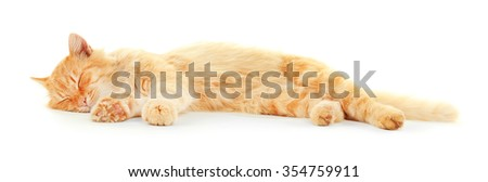 Cute red cat lying isolated on white background