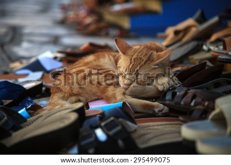 Cute red cat sleeping on a shoes bench. The shoes keeper. - stock photo