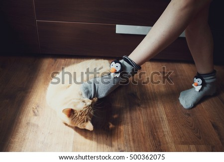cute red-haired cat is playing with toe
