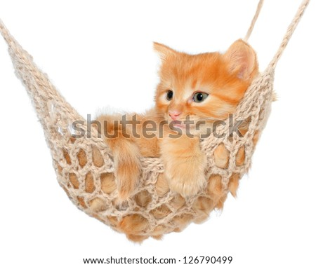 Cute red-haired kitten in hammock on a white background.