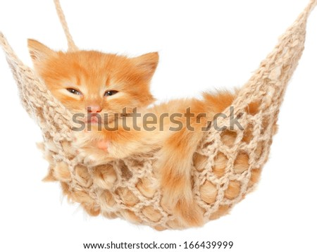 Cute red haired kitten in hammock on a white background.