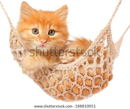 Cute red haired kitten lay in hammock on a white background. - stock photo