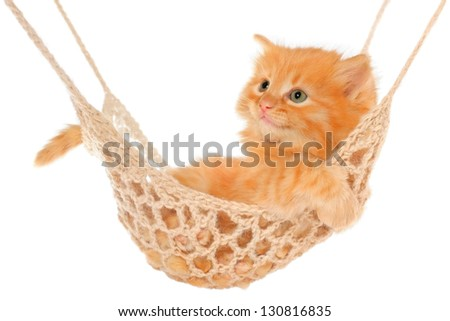 Cute red-haired kitten lying in hammock on a white background. - stock photo