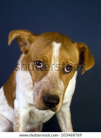Cute Red Head Puppy With Strong Magical  Eyes. He Is Six Months Old. - stock photo