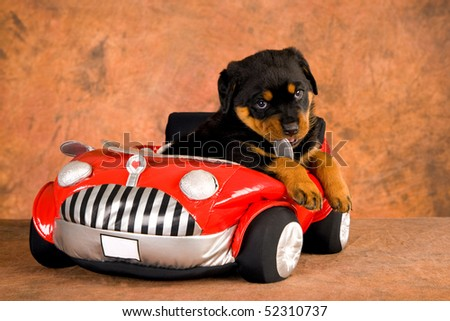 Cute Rottweiler puppy in red toy car, on brown mottled background fabric - stock photo