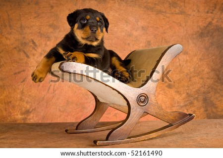 Cute Rottweiler puppy on foot stool, on mottled brown background - stock photo
