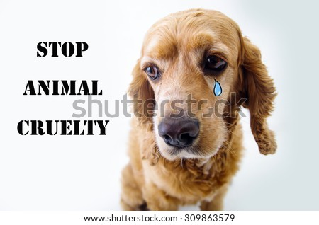 Cute sad English Cocker Spaniel puppy in front of a white background with a tear sketch and stop animal cruelty sign. - stock photo